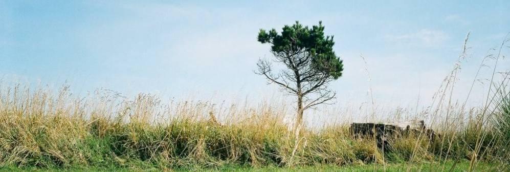 lone-tree-alongsdie-the-waihopai-walkway-invercargill.jpg