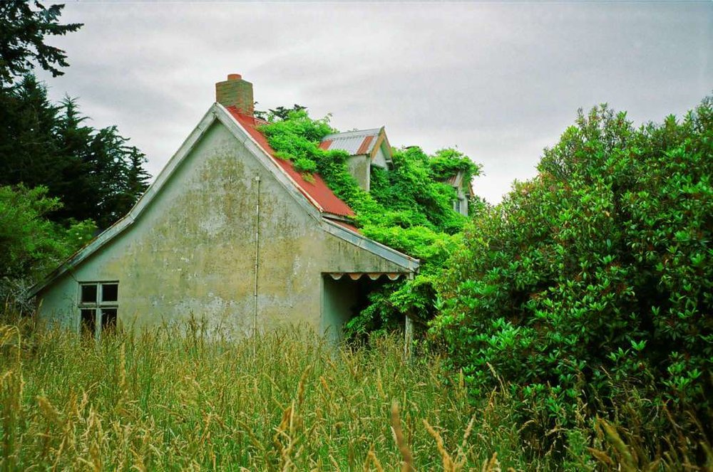 Abandoned, overgrown cottage alongside SH1