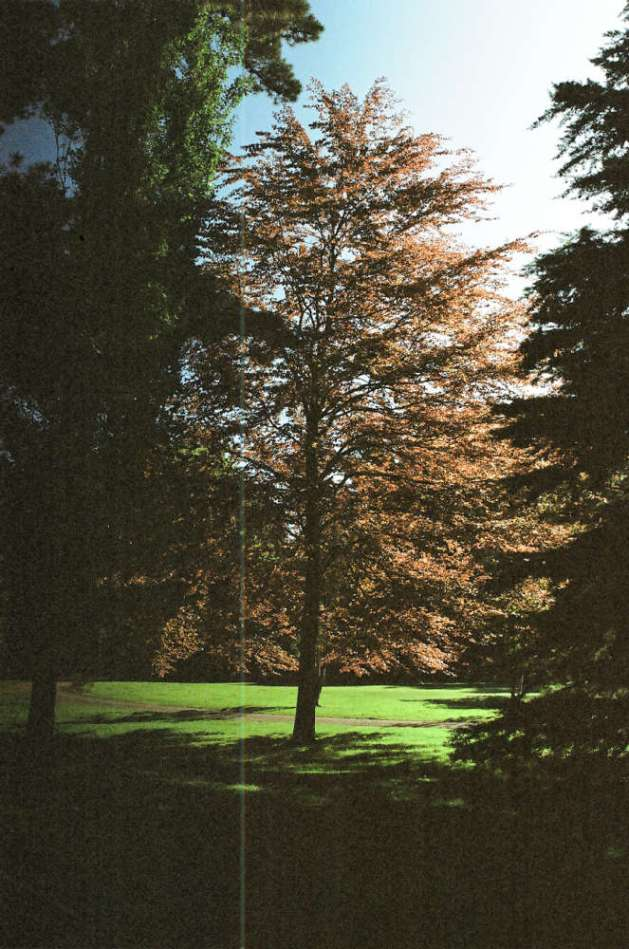 tree-in-queens-park.jpg