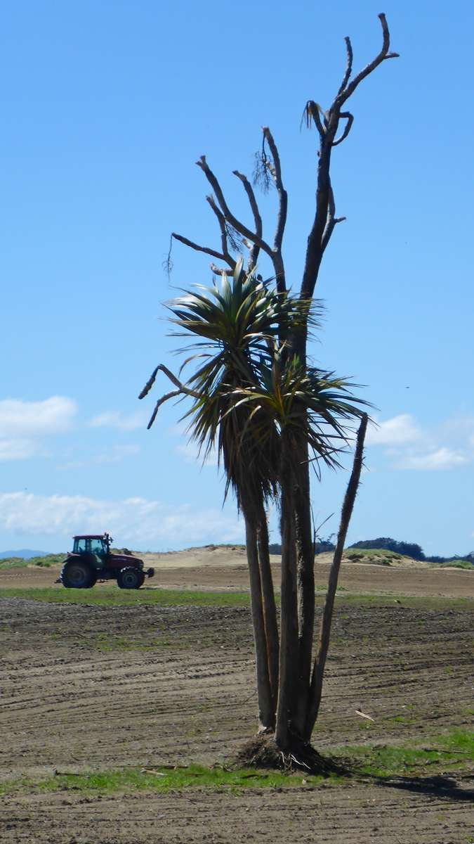 tree-and-tractor.jpg