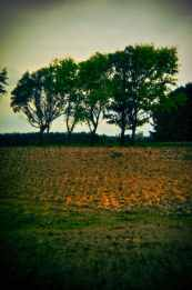 southland-countryside-holga.jpg