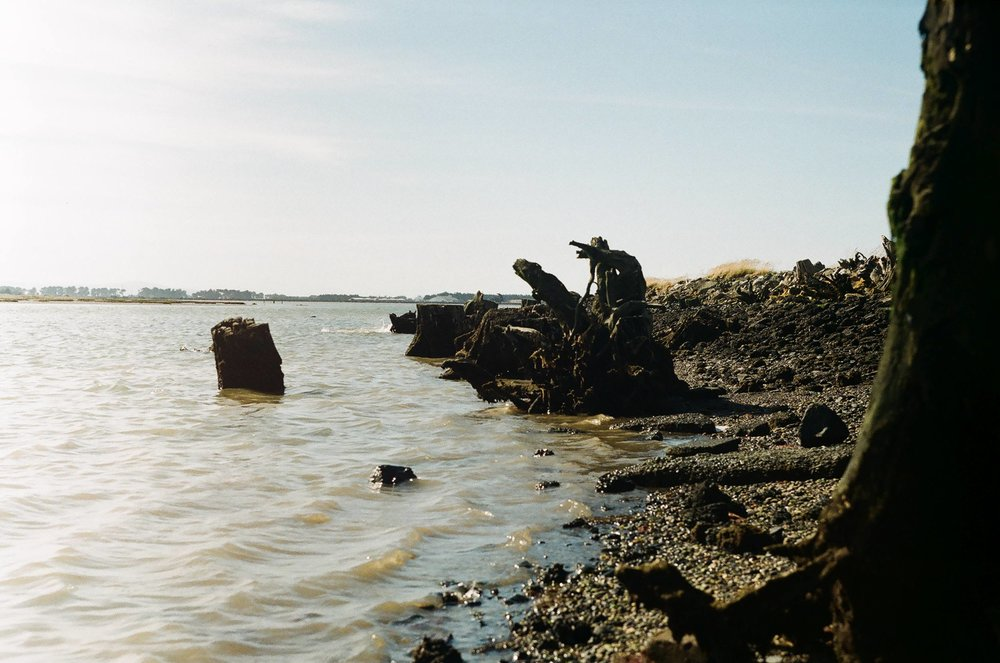 Stumpy foreshoe of the Invercargill Estuary