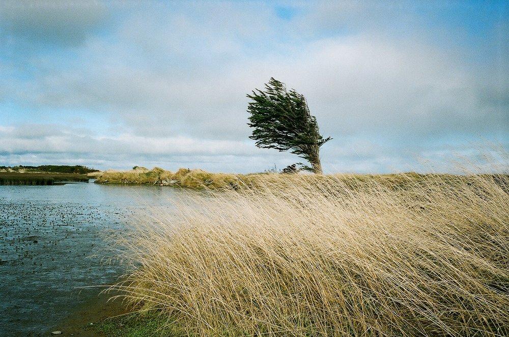 Lone tree near the Roger Sutton Boardwalk, Invercargill Estuary Walkway