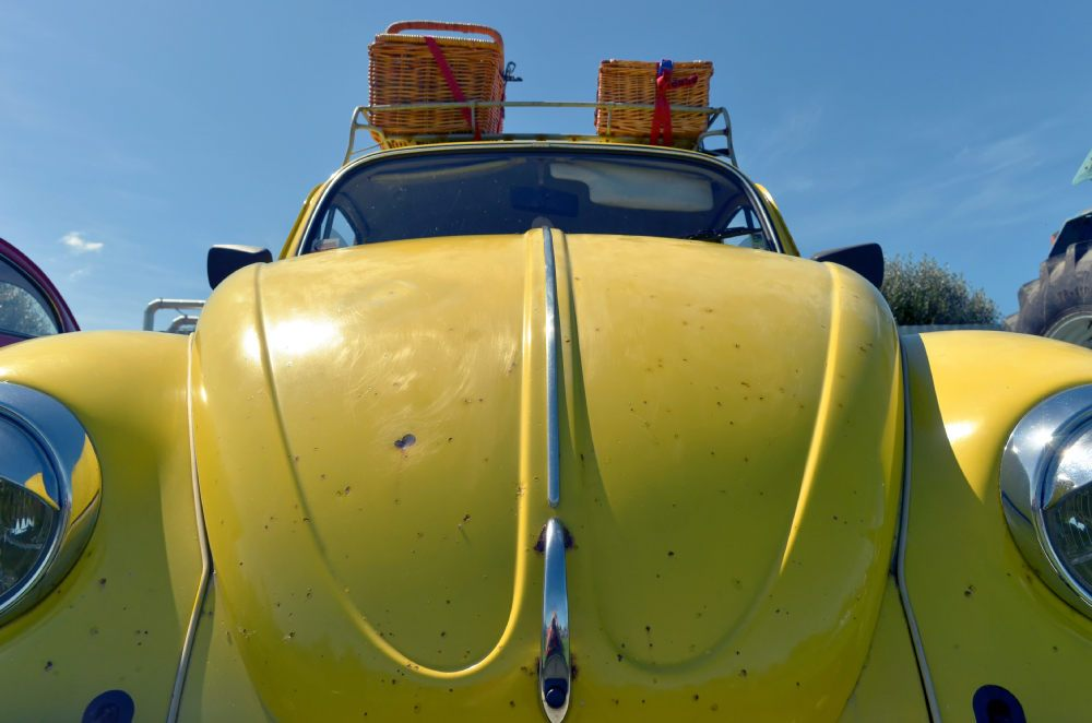 28-yellow-beetle-full-frontal.jpg