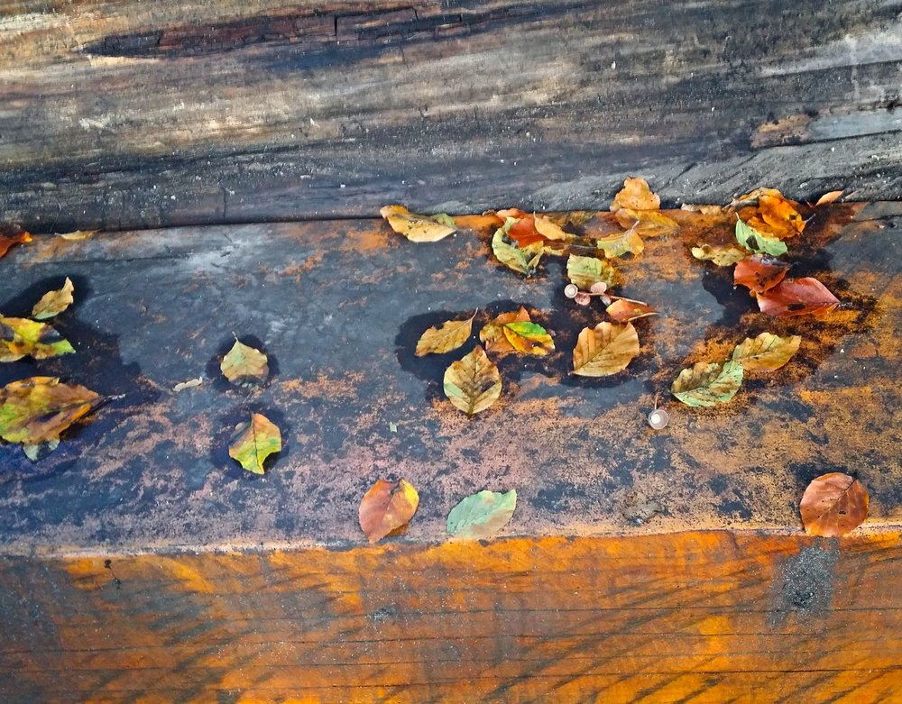 Leaves on a park bench