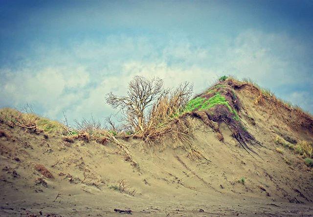 Oreti Beach, Invercargill #invercargill #southland #newzealand #on1photoraw #hdr #theoccasionalphotoblogger