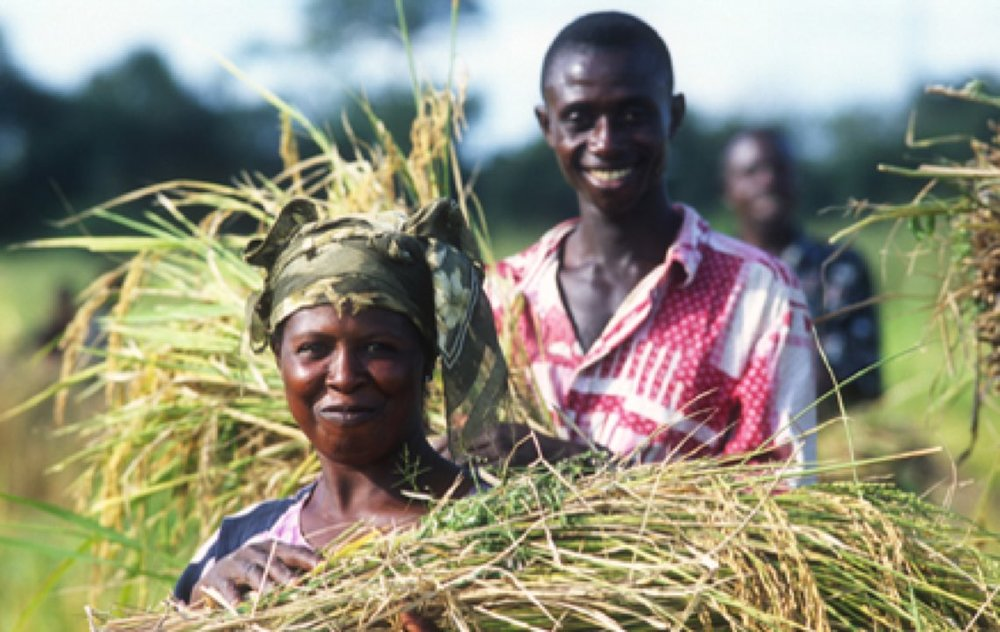 un-food-and-agriculture-org-fao.jpg
