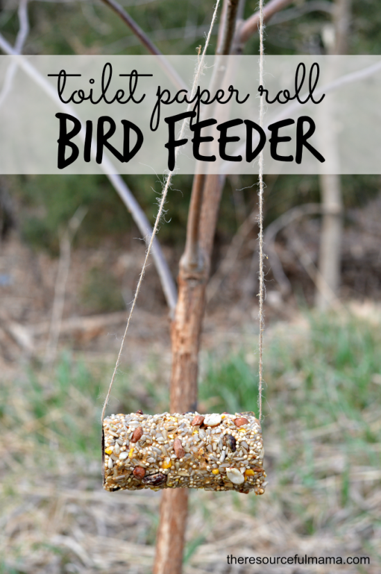 toilet-paper-roll-bird-feeders-x-1