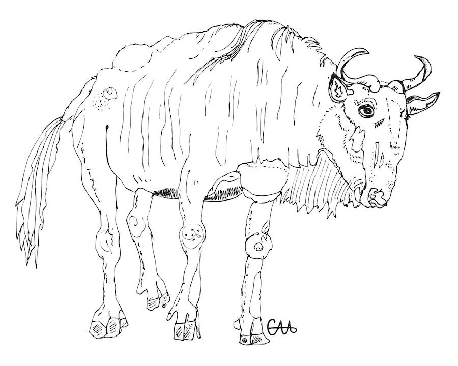 wally 8x10 wildebeest.jpg