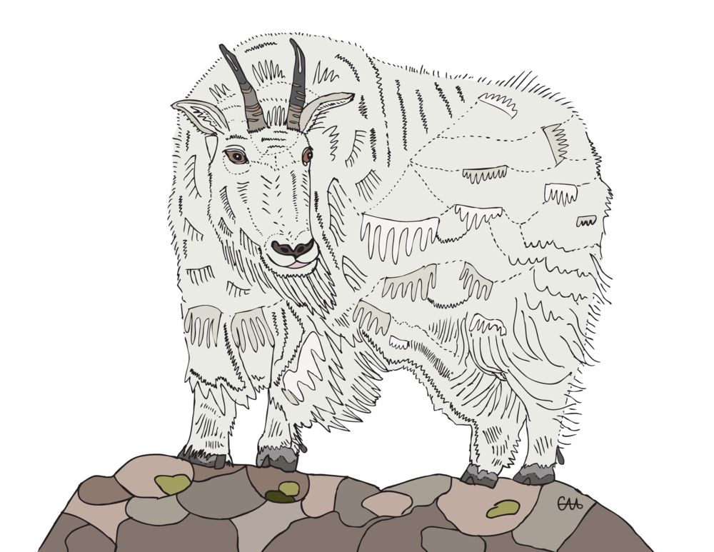 mountain goat colour.png