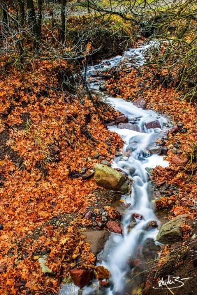 Autumn Creek jpg.jpg