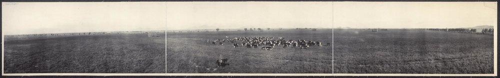 Moonpark Ranch-1892