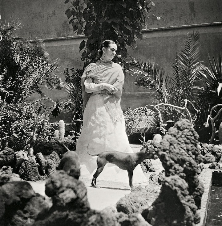 Frida in her garden with two fo her dogs, by gisle Freund, circa 1950. For this and other photos by Gisle Freund,  Click here .
