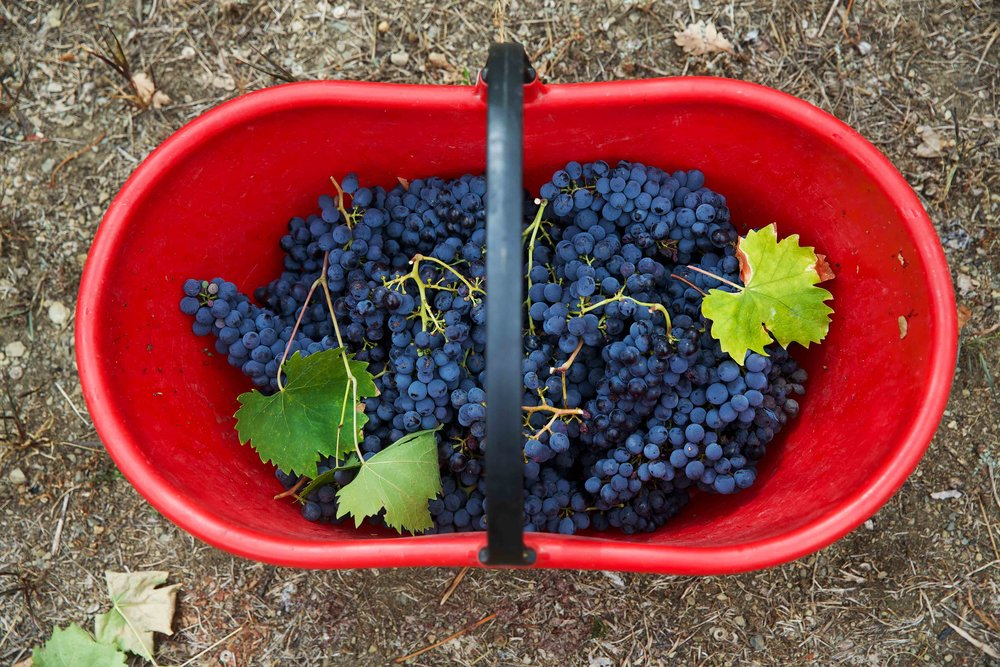 Grape harvest, why over complicate a shot? Simple is often best.
