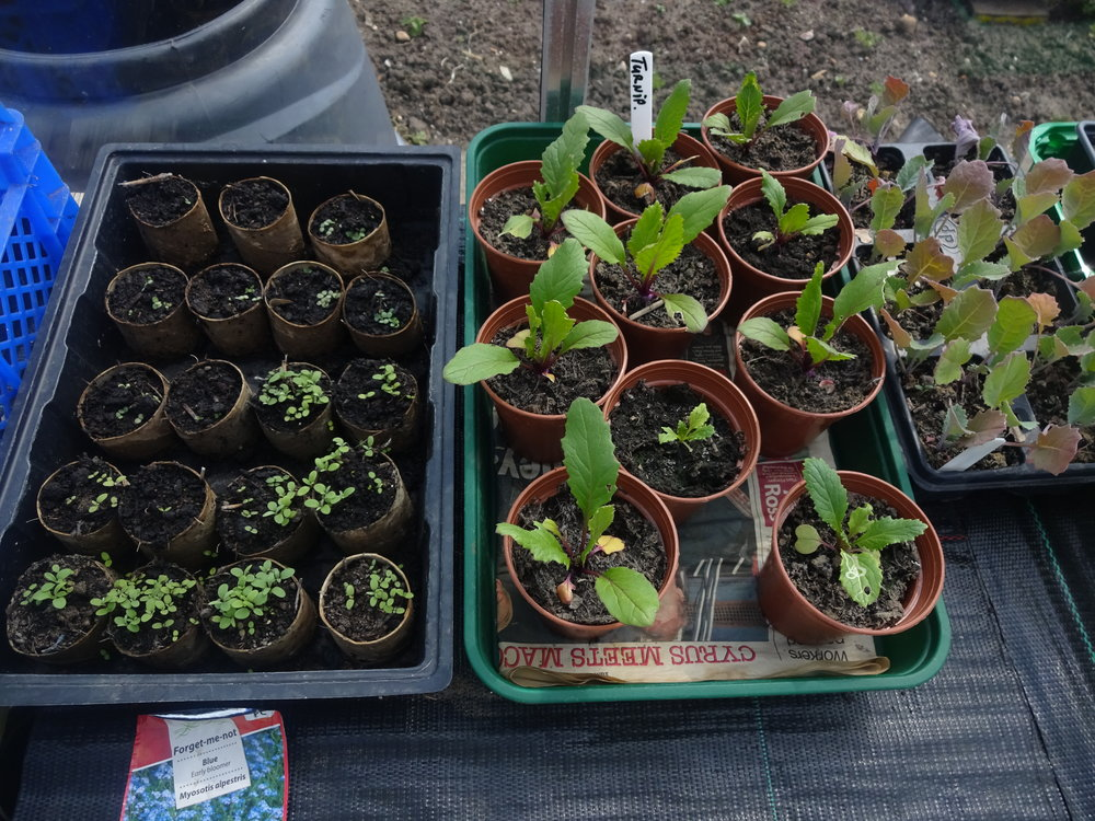 Trays of new shoots