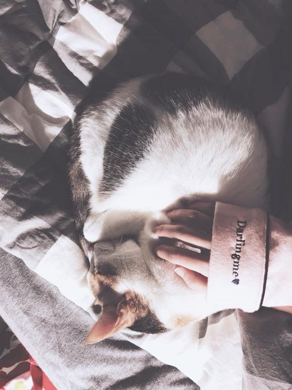 很喜歡pazzo🖤🖤🖤已經認識pazzo五六年了~除了永遠最愛低pazzo黑褲買到爛掉之外 衣櫃裡默默地也好多好多pazzo的衣服☺️最近的衣服風格每件我都好喜歡!每次上新品都被燒到不行🔥🔥🔥尤其是這件可愛的睡衣💕材質真的好舒服好療癒~每個晚上都很期待趕快洗完澡可以穿著可愛睡衣在床上跟貓玩滑滑手機😆 _端木平