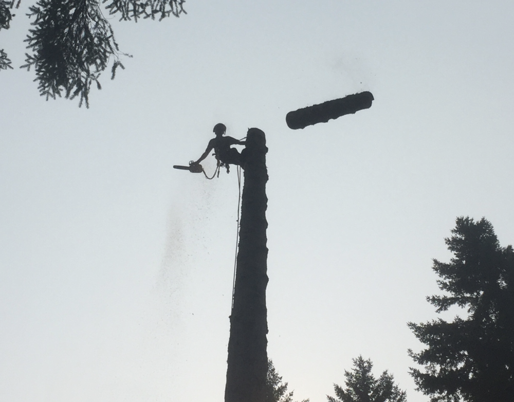 Tree Removal Metro Vancouver