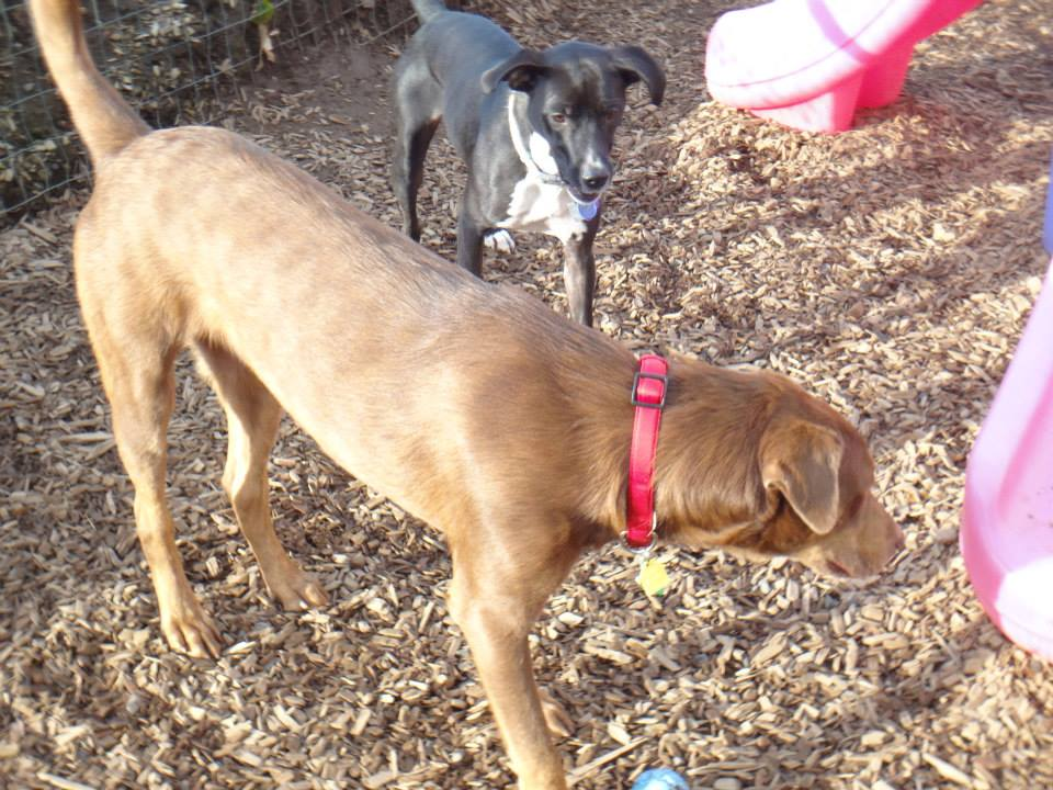 DogBoarding.jpg