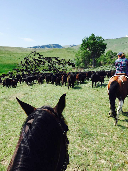 herding-cattle-wyld-leadership.JPG