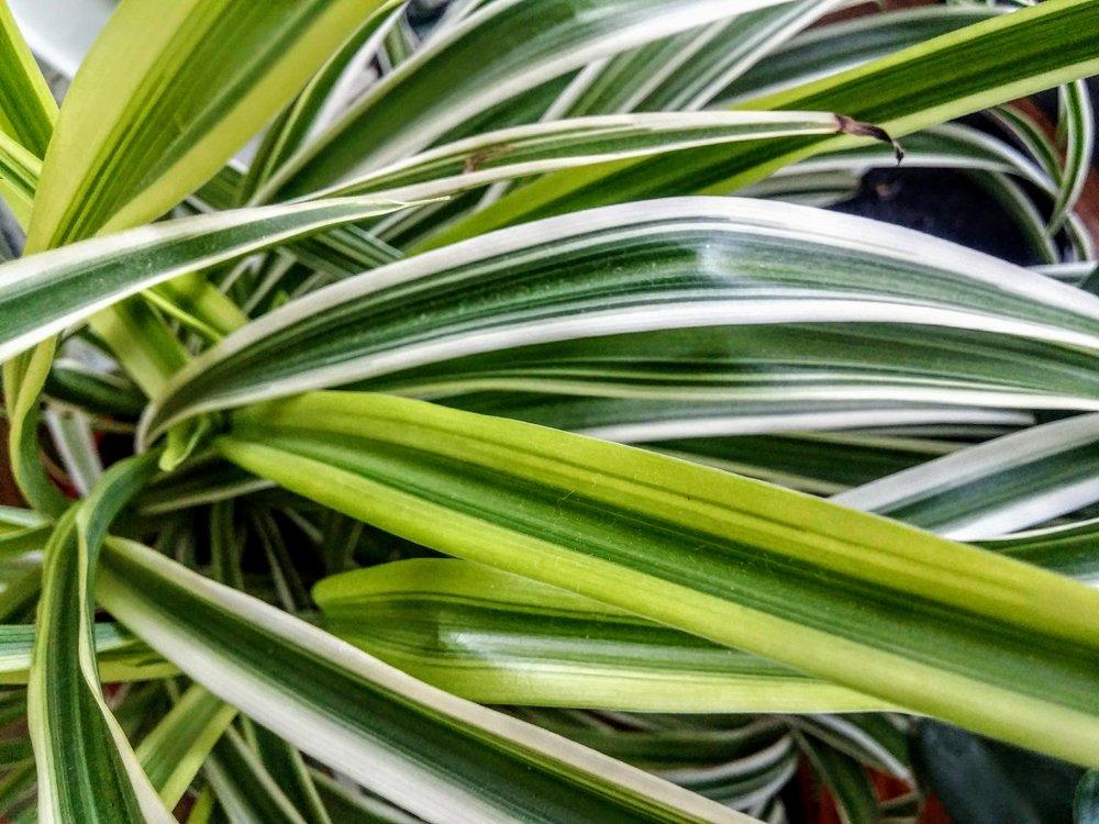 home plants -