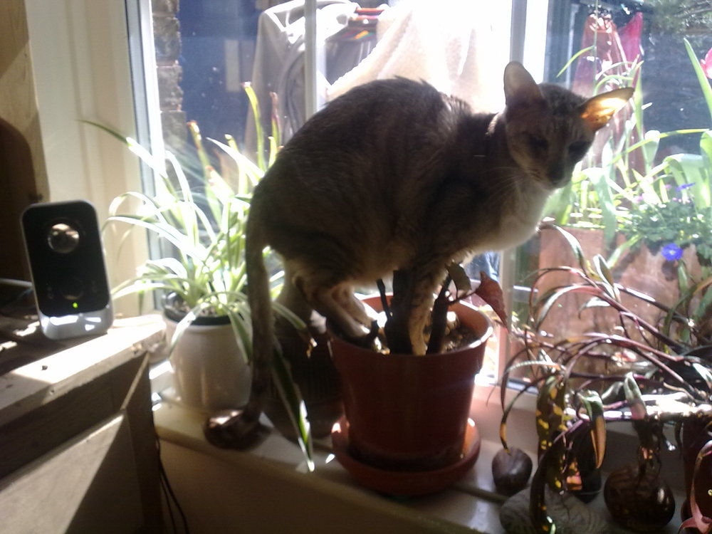 The plants were in the sun, so he was going to share the sun with them. Translucent ears indicate a need for sunlight in cats (probably).