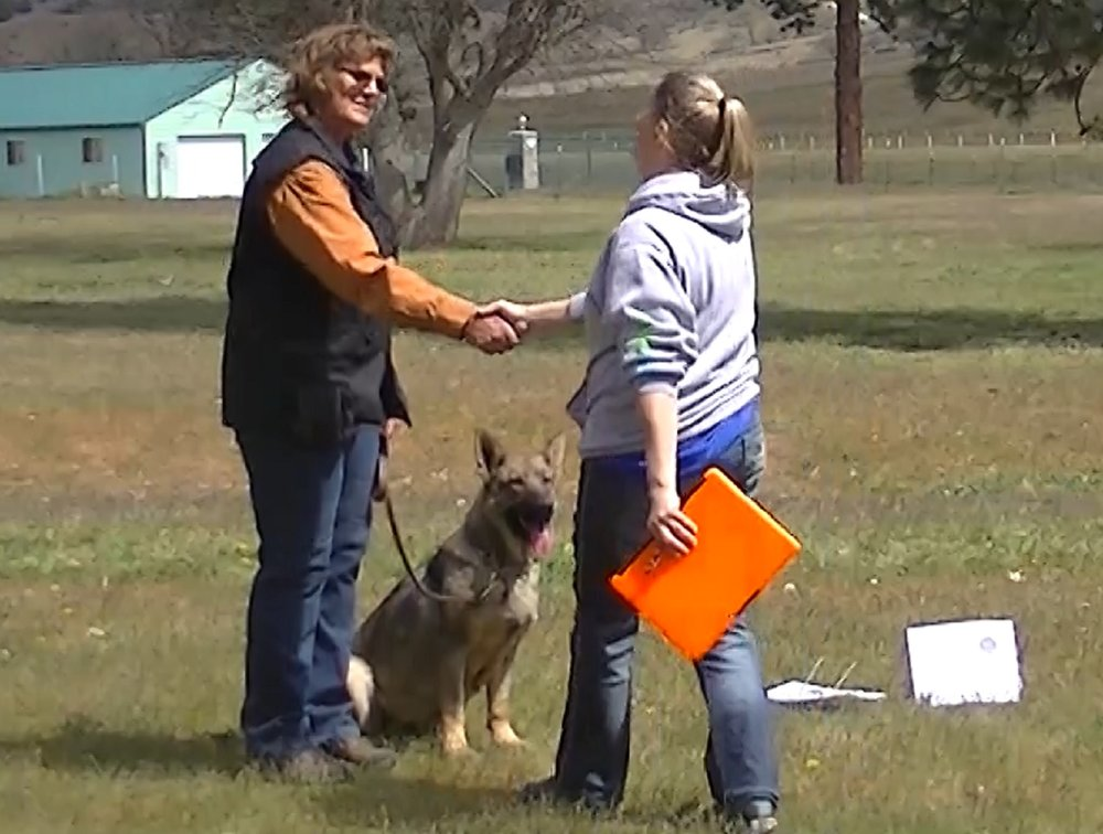 Item 1:Accepting a Friendly Stranger - This test demonstrates that the dog will allow a friendly stranger to approach and speak to the handler in a natural, everyday situation. The dog must show no sign of resentment or shyness and must not break position or try to go to the evaluator.