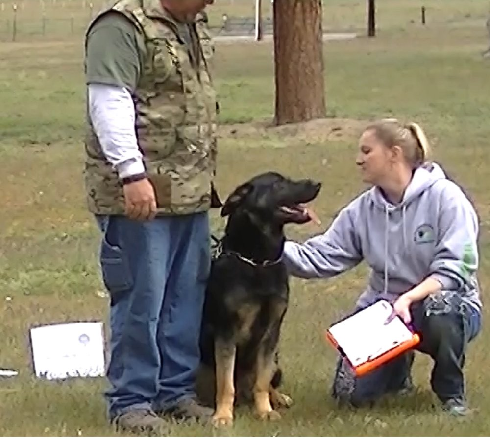 Item 2:Sitting Politely for Petting - This test demonstrates that the dog will allow a friendly stranger to pet it while out with its handler. The evaluator will pet the dog on the head and body. The dog must not show shyness or resentment.