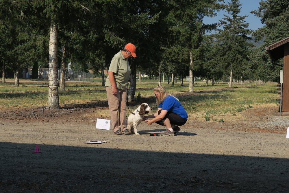 Item 3: Appearance & Grooming - This test demonstrates that the dog will welcome being groomed and examined and will permit someone, such as a veterinarian, groomer or friend of the owner, to do so. The evaluator softly combs or brushes the dog, lightly examines the ears, and gently picks up each front foot.