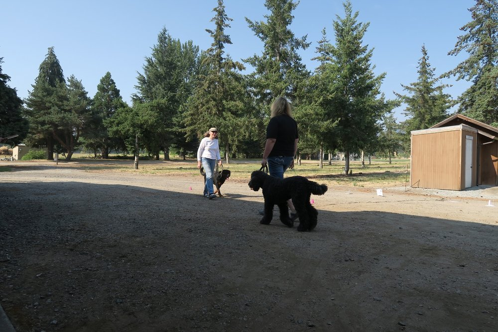Item 8: Reaction to Another Dog - This test demonstrates that the dog can behave politely around other dogs. Two handlers and their dogs approach each other from about 20 feet, stop, shake hands and exchange pleasantries, and continue for about 10 feet. The dogs should show no more than casual interest in each other. Neither dog should go to the other dog or its handler.