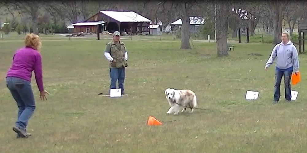 Item 7: Coming when Called - This test demonstrates that the dog will come when called by the handler. The handler will walk 10 feet from the dog, turn to face the dog, and call the dog.
