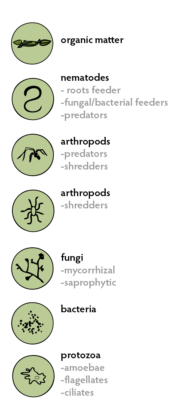 Soil Living Organisms