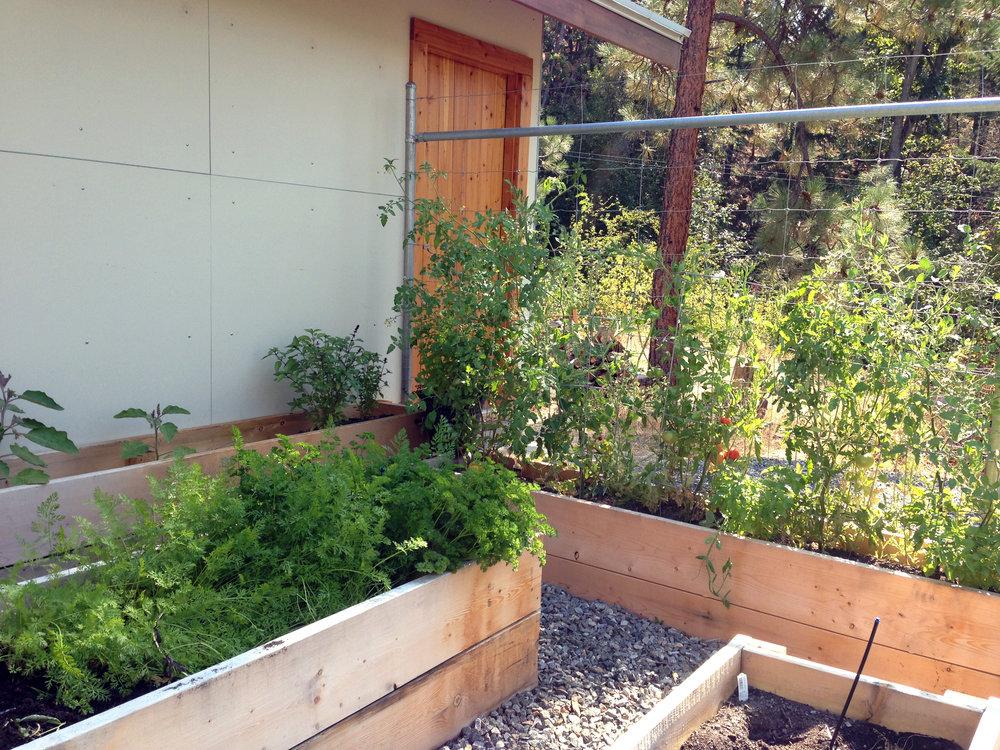 Edible Garden Beds