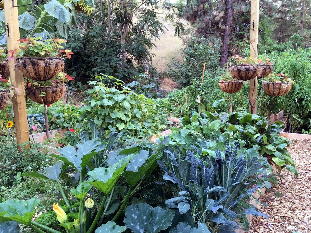 Vegetable Garden Beds and Vertical Strawberries growing