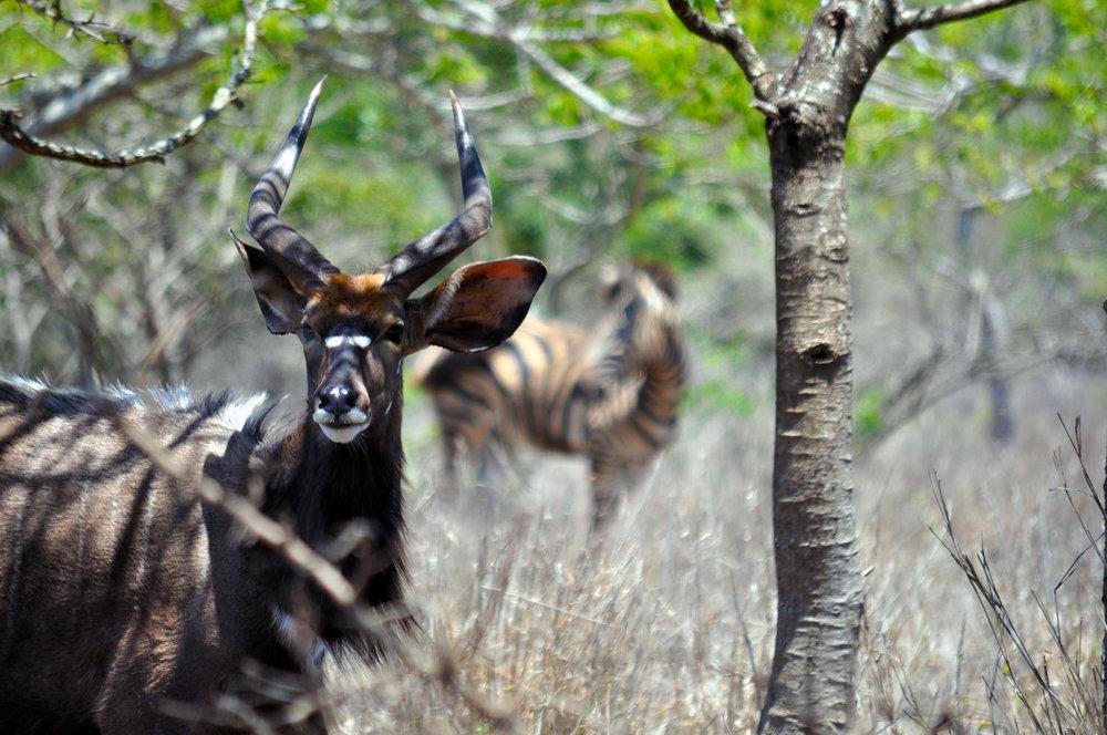 Bushlands - 2015 - Bushlands-DSC_0167.jpg