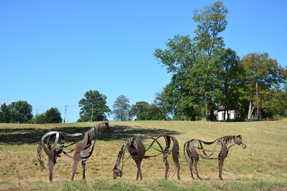 Horse Series -