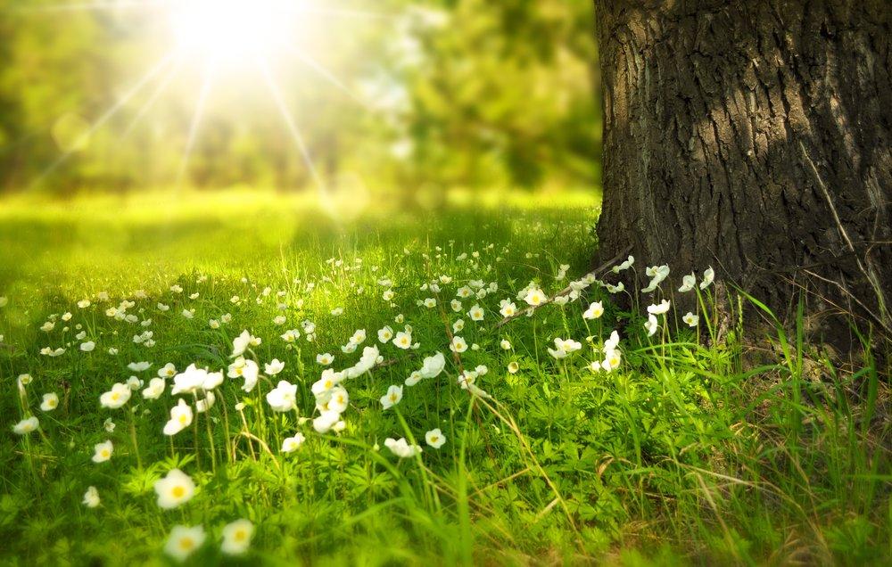 nature-flowers-sun-60006.jpg