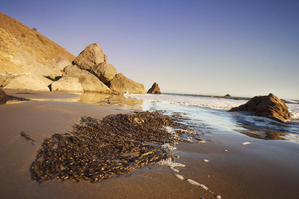 MUIR BEACH -