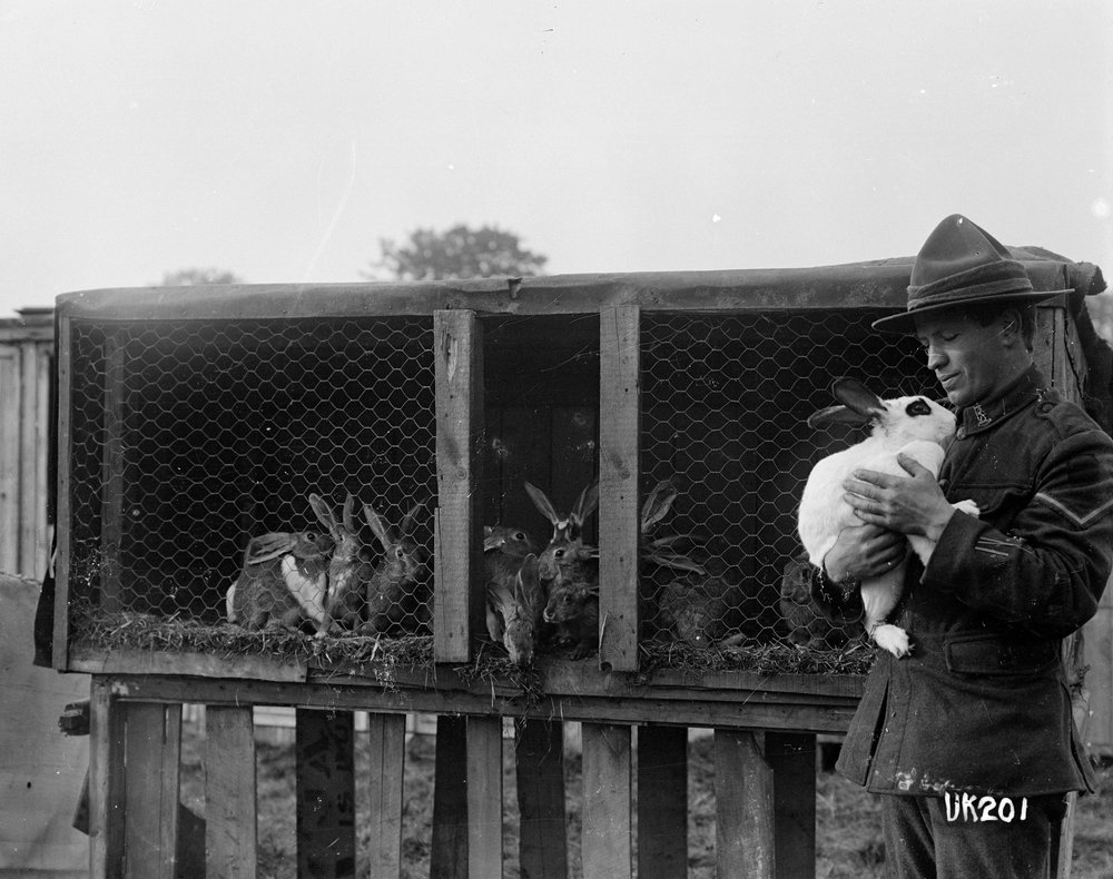 A rabbit hutch at Hornchurch Convalescent Camp, World War I
