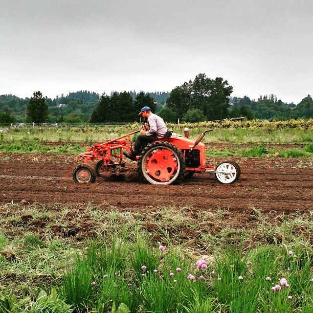 mark g tractor.jpg