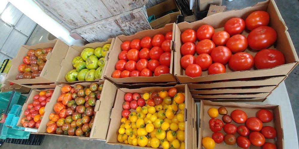heavy tomato.jpg