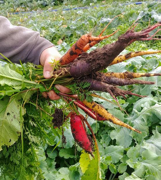 fall roots.jpg