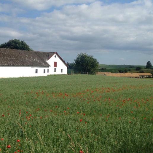 Poppies, Mols Bjerge