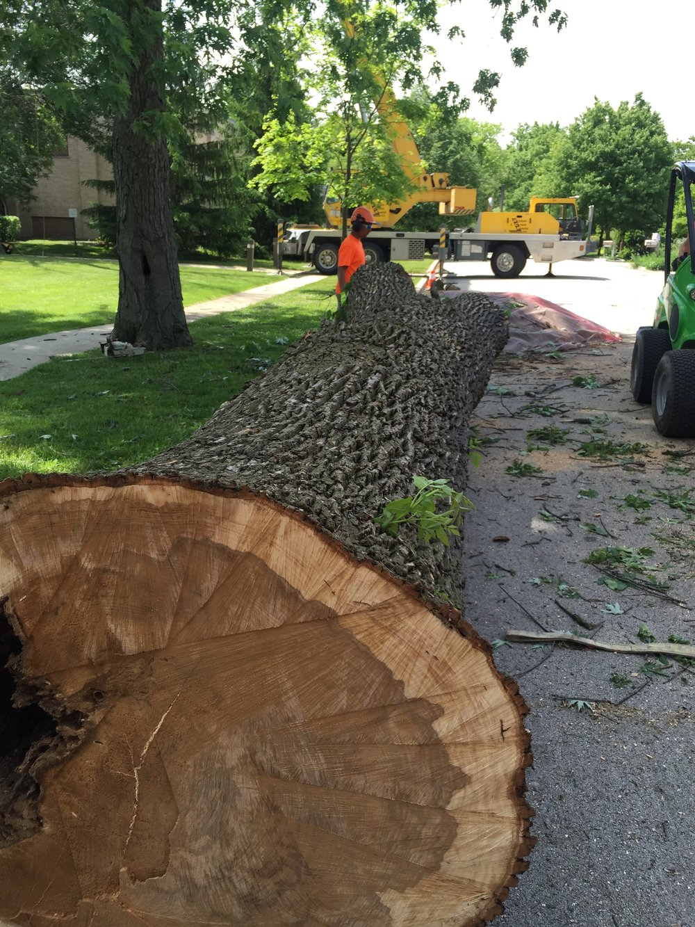 Ash Removals Frankfort Park District