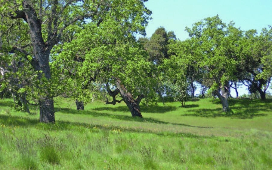 A healthy oak woodland and grassland habitat consisting of native grasses resulting from pro-active land stewardship and effective resource management practices.