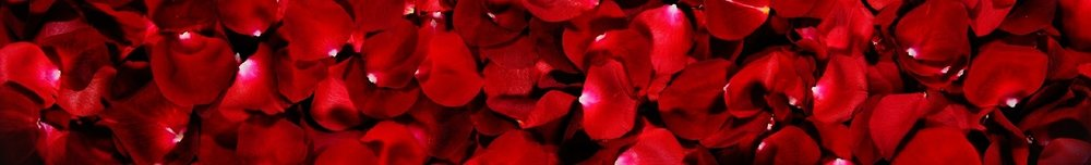 red-rose-flower-petals-background-header.jpg