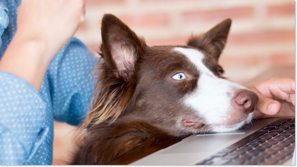Dogs Can Do Video Chat Too