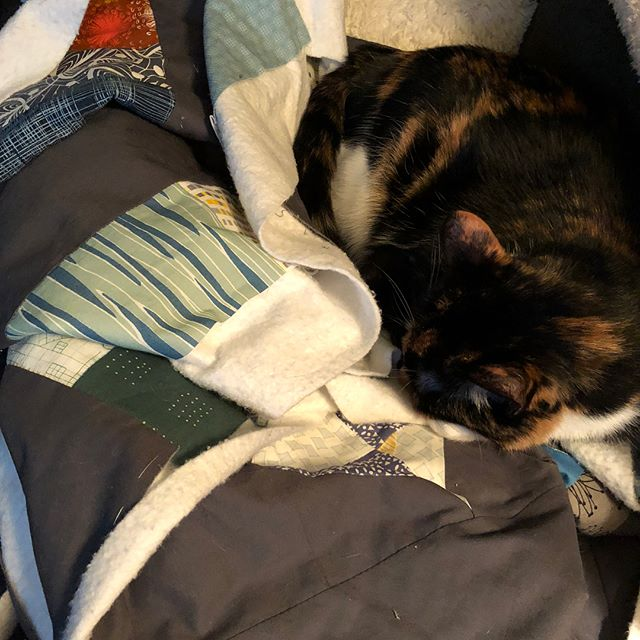 And this is why all of my quilts come with apologies for the cat hair! Anyone else have this problem? #quiltingcatsofinstagram