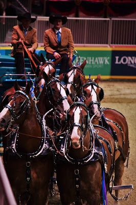 Pure Horse Sense Blog- Belgian Six Horse Hitch at the royal winter fair