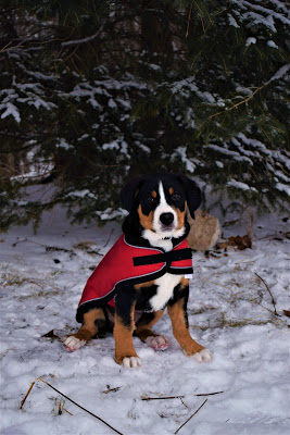 Greenhawk warehouse sale. Shedrow tundra dog coat in red | Pure Horse Sense Blog