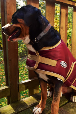 Greenhawk's warehouse sale. Shedrow tundra dog coat in burgundy | Pure Horse Sense Blog